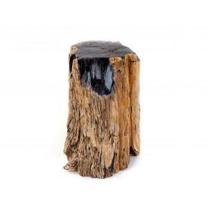 Petrified Wood Stump