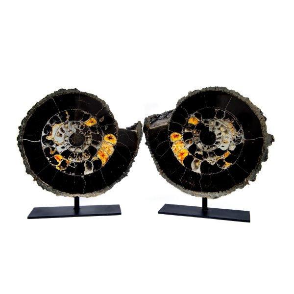 Ammonite Pair with Pyrite
