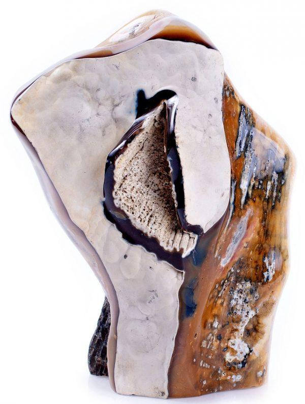 fossilized coral jasper