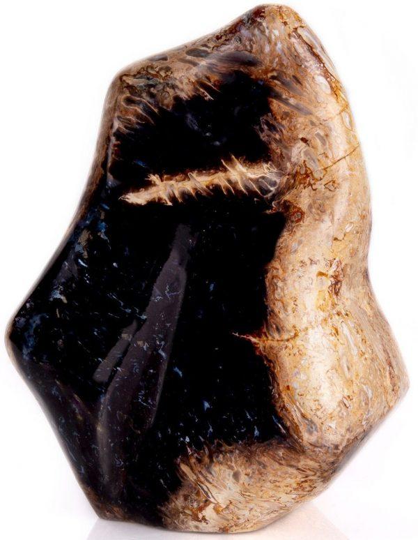 Petrified Palm Root