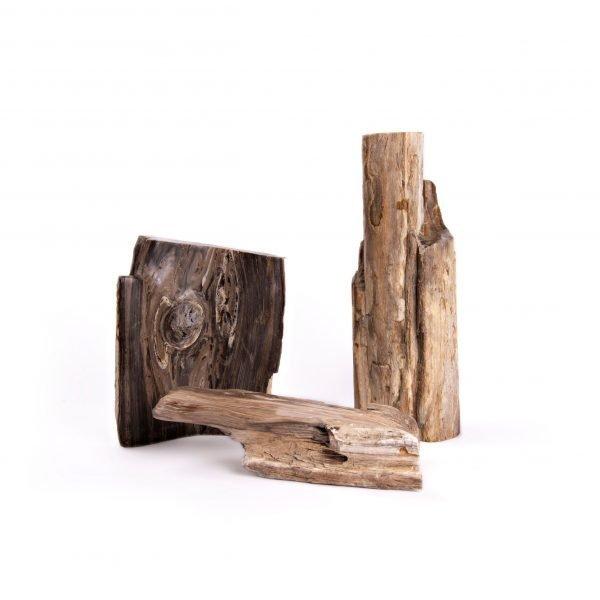 Petrified Wood Group