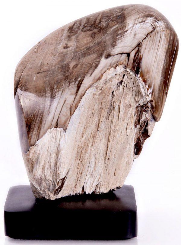 Petrified Wood on Stand